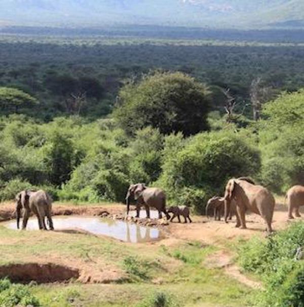 Happy and protected elephant herd in Northern Kenya