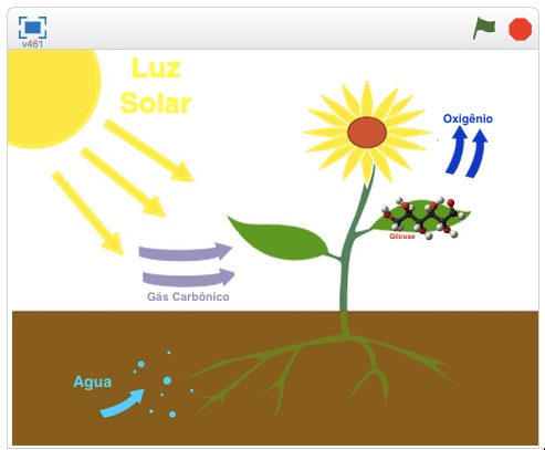 SCIENCE - Photosynthesis