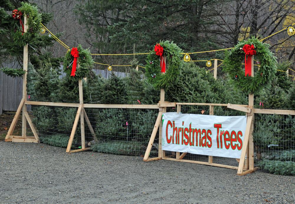 christmas tree sales kiwanis fwb