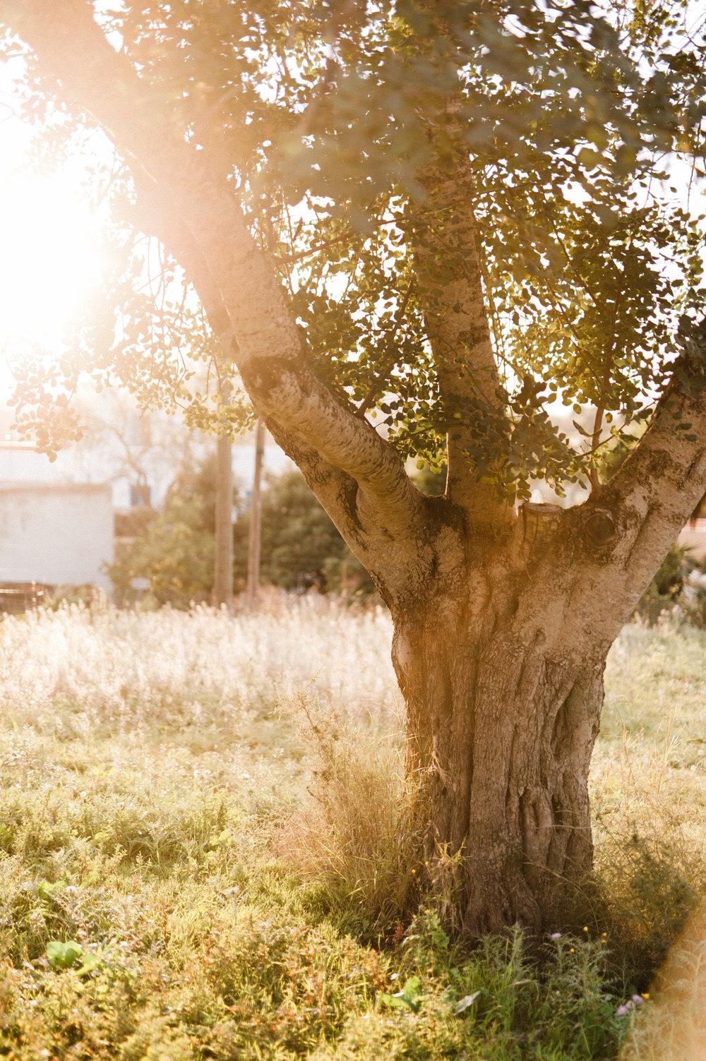 JenniferArndtPhotography(1of15).jpg