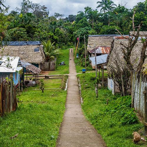 forest village3.jpg