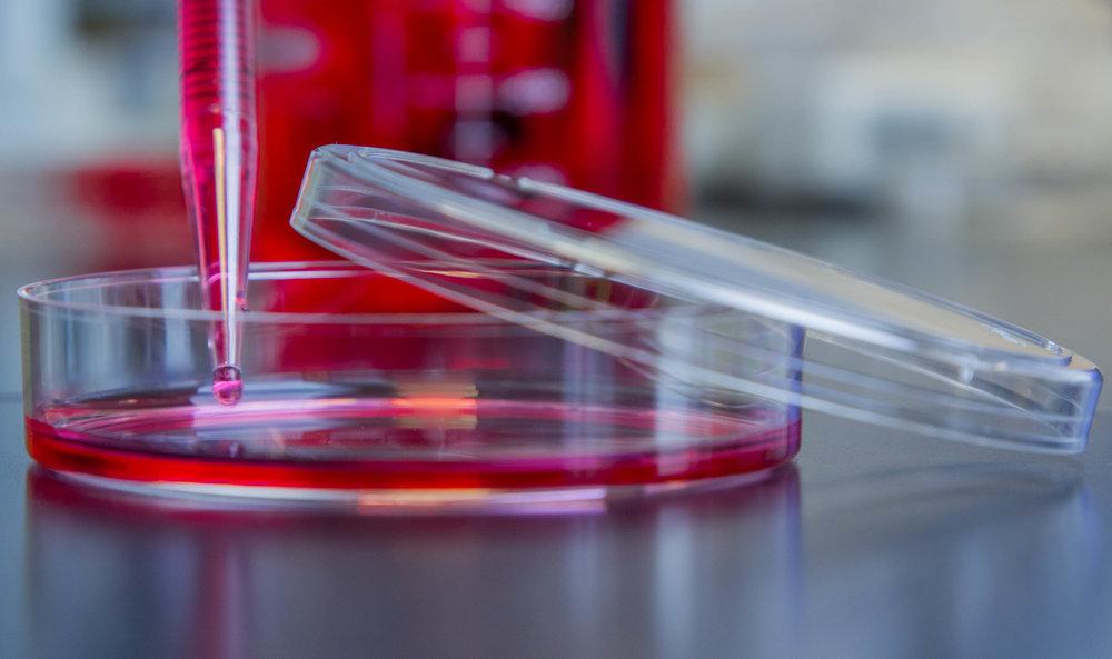 Red Dye Petri Dish 3 (1).jpg
