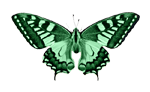 Butterfly Small.png