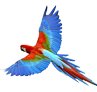 Parrot Small.png