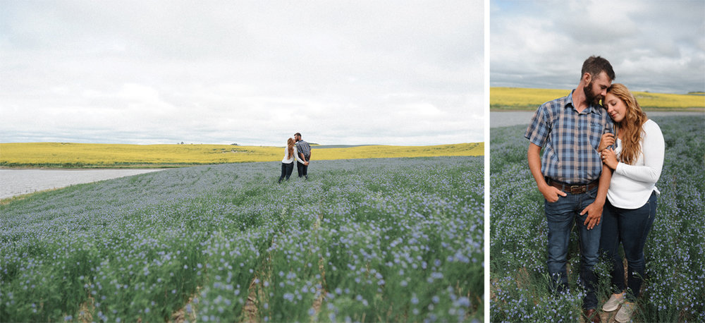 canola field engagement 2.jpg