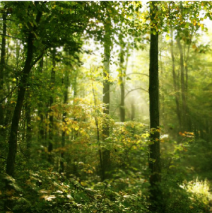 forest-light-300-x-300.png