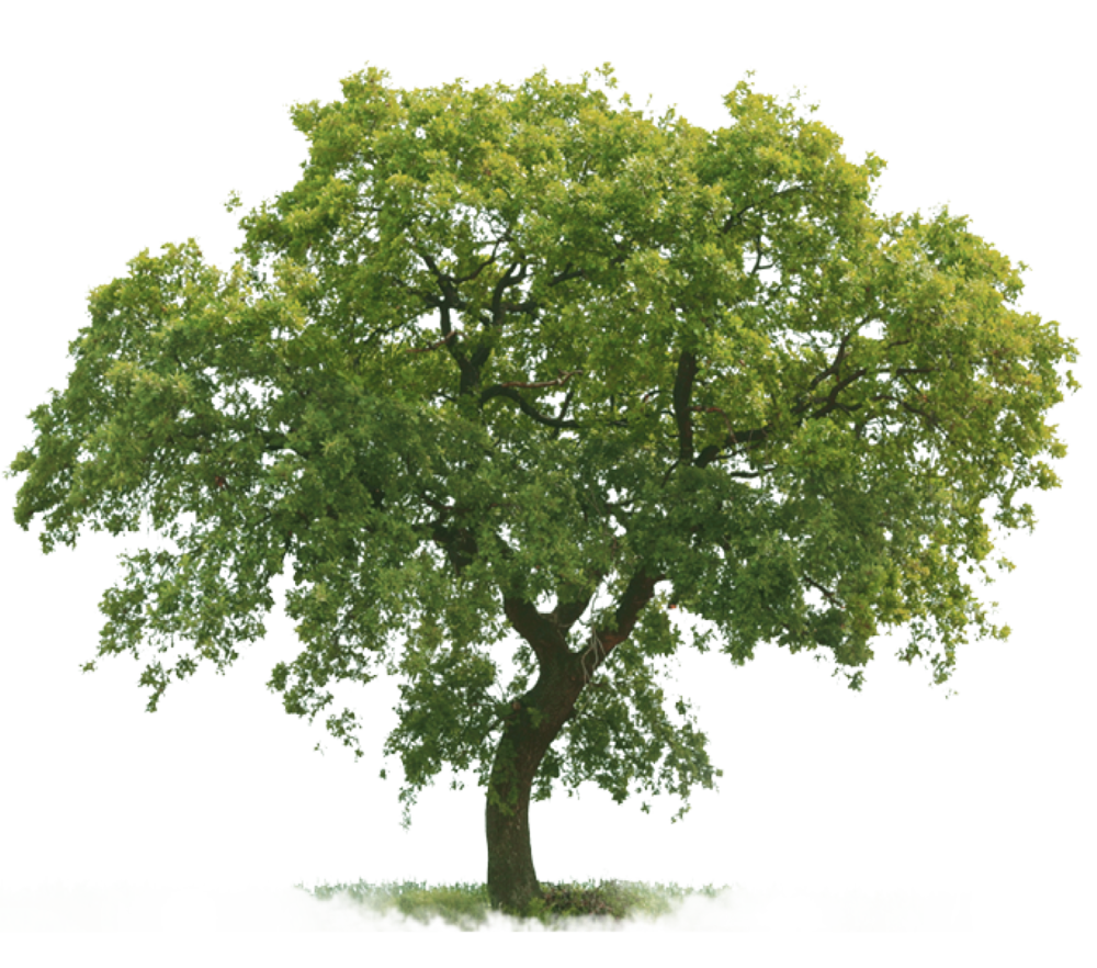 Tree-blank.png