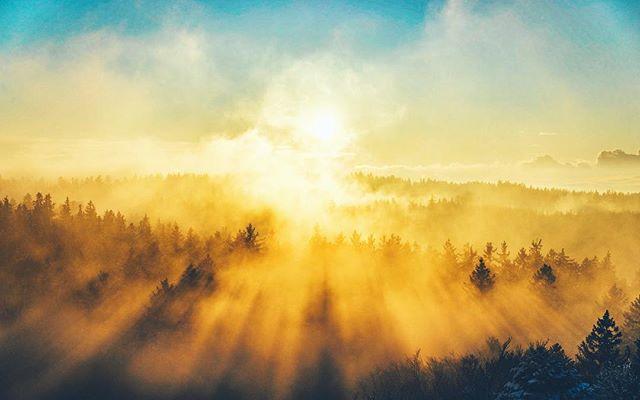 🤤➡️🥶 📸 #sonyalpha #lightroom #️⃣ #sonyimages #landscape #winter #forest #fog #sunset #goldenhour #sunshine #frozen #cold #beautiful #photography #photooftheday #picoftheday #innviertel #austria #visitaustria #wanderlust #igers #igersaustria #1000thingsinaustria #panorama #explore #oberösterreich