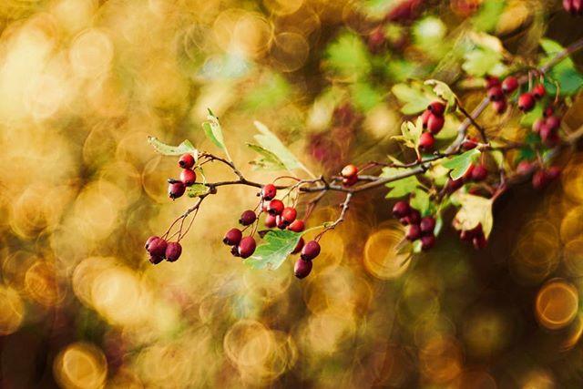 🙅♀️bubble tea 🙋♀️bubble bokeh 📸 #sonyalpha #lightroom #️⃣ #sonyimages #branches #goldenhour #autumn #fall #forest #warm #beautiful #photography #photooftheday #picoftheday #innviertel #igers #igersaustria #explore #macro #makro