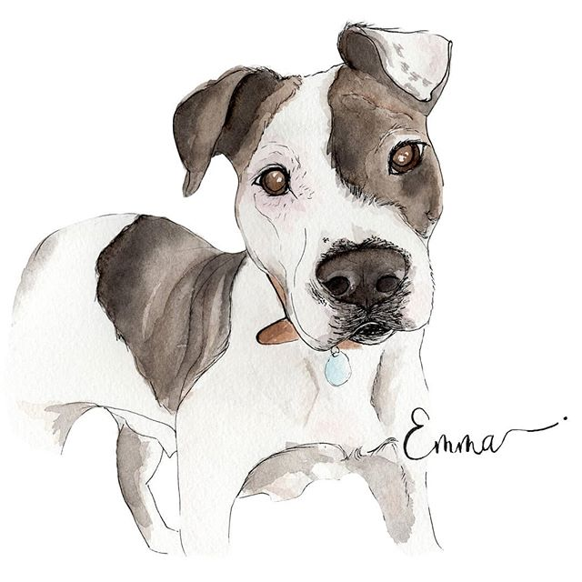 I get all warm inside when men order Pawtraits as gifts for their partners!! It shows so much thought and appreciation to have something customers made of your canine companion!! Emma was painted as an anniversary gift for @megs_coles from @colemancalligraphy Don't you just wanna play @emma.wiggle.worm ears?! . . #Pawtrait #petportrait #pittiemix #dallasartist #watercolordog #mothersdaygift #anniversarygift #thoughtful #boopable #whorescuedwho