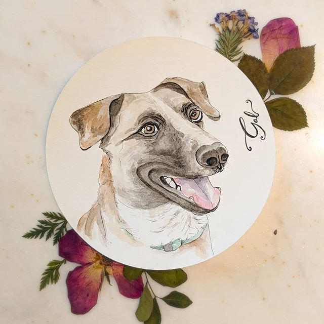 This good doggo, Gal, is a 2ish year old shelter dog who just likes to go around and lick people. Everyone she meets is her best friend. Her hobbies also include chasing squirrels in the backyard and playing fetch with her #1 best friend, Barrett. Swipe to see my poorly rendered process video, lol. . . #galsbestfriend #Pawtrait  #birthdaypresent #watercolordog #shepherdmix #squirrellife #dallasartist #etsydallas2019 #paintingintheround #papercircle #myboyfriendsbestfriend @gals.best.friend @muttscantina