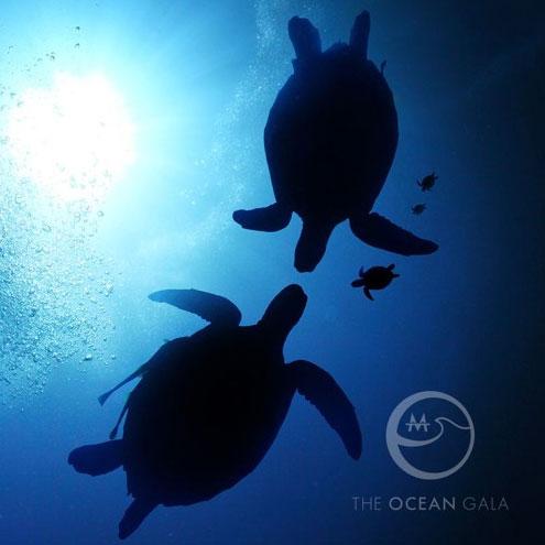 John_Dill-The-Ocean-Gala.jpg