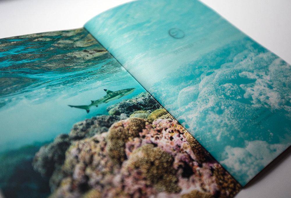 john_dill_nyc-Ocean-Gala-012.jpg