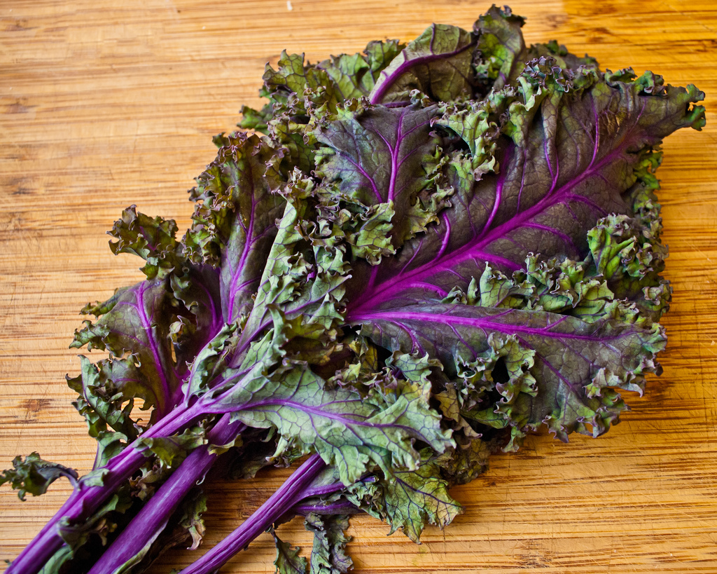 MUF-Red-Russian-Kale