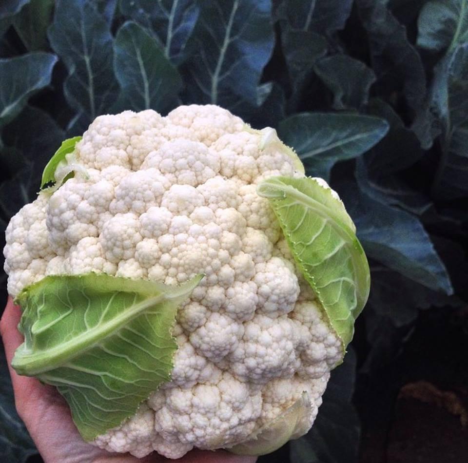cauliflower-coliflor.jpg
