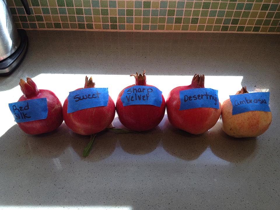 pomegranates small.jpg