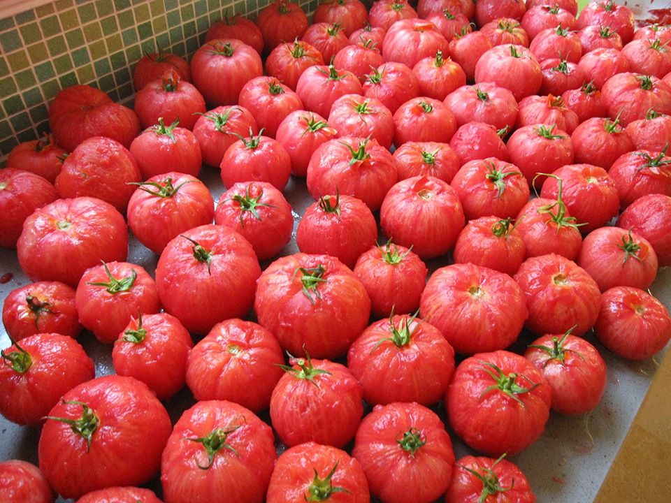 small tomatoes.jpg