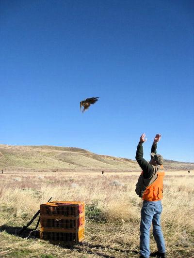 2009_pheasant7.jpg