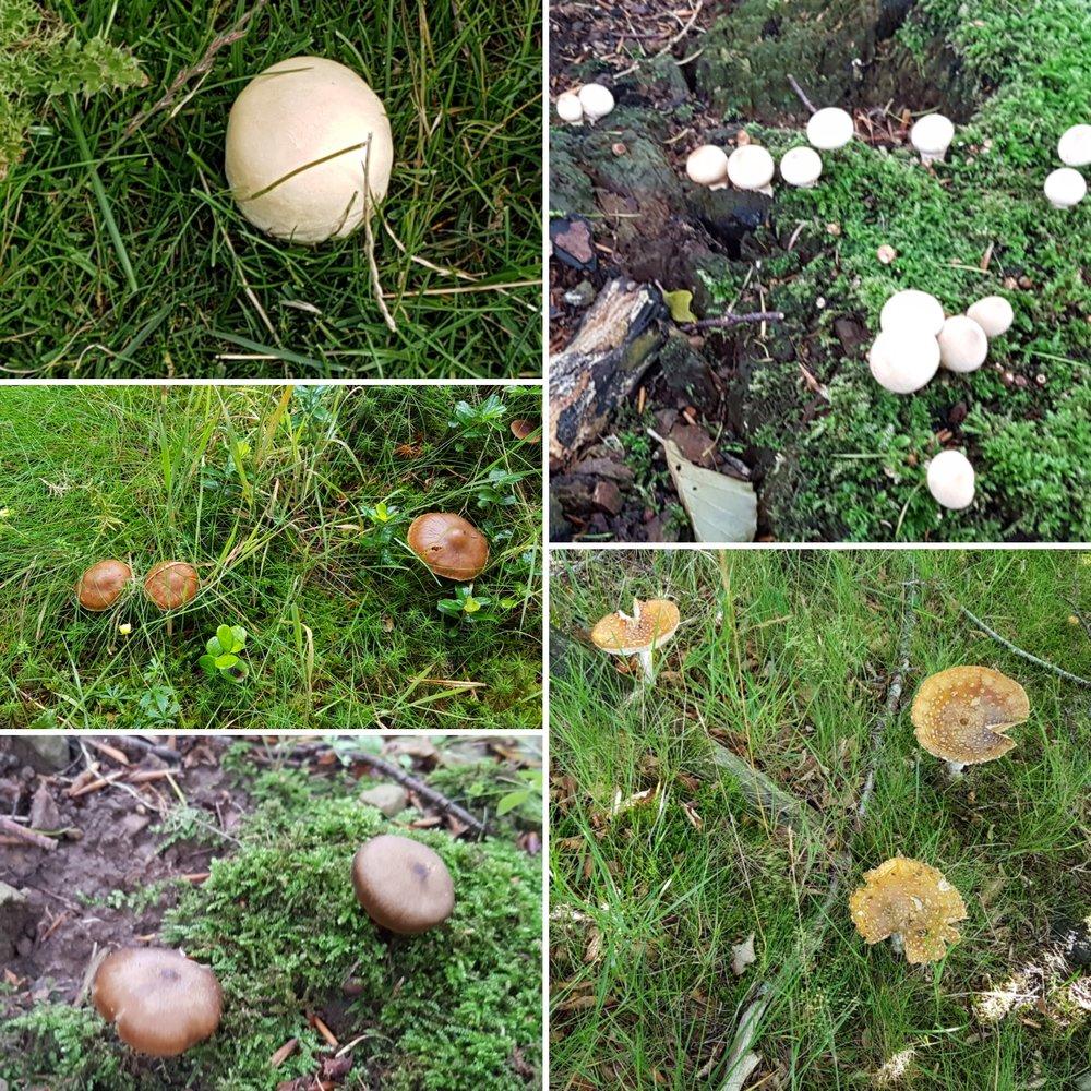 A mushroom lovers dream