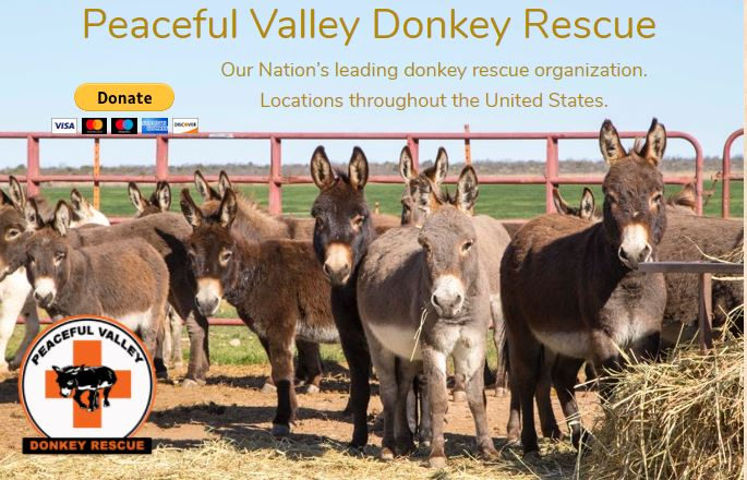 Twenty miniature donkeys at the PVDR ranch in San Angelo, Texas, were transferred to a horse ranch in Arizona in 2016 to be adopted out.  The Arizona ranch fielded so many calls from across the U.S. they had to use a lottery system for the adoption.