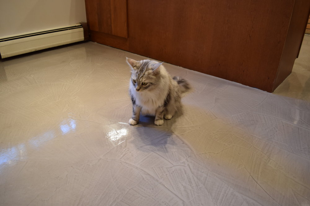 One of our previous customer's prize-winning, pure bred cats is surveying, and appears to be captivated by, the new decorative cement overlay we installed in her owner's kitchen.