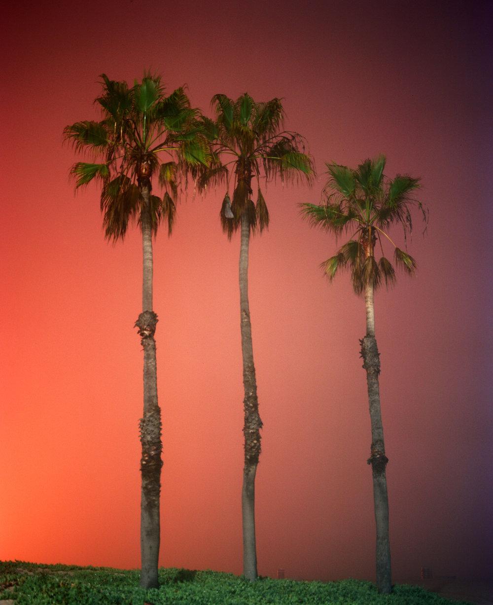 palms.dockweiler.12.12.jpg