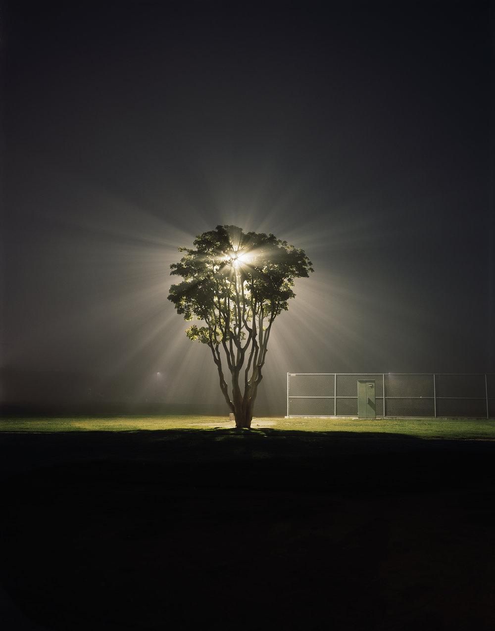 Tree, Marina Del Rey, CA.