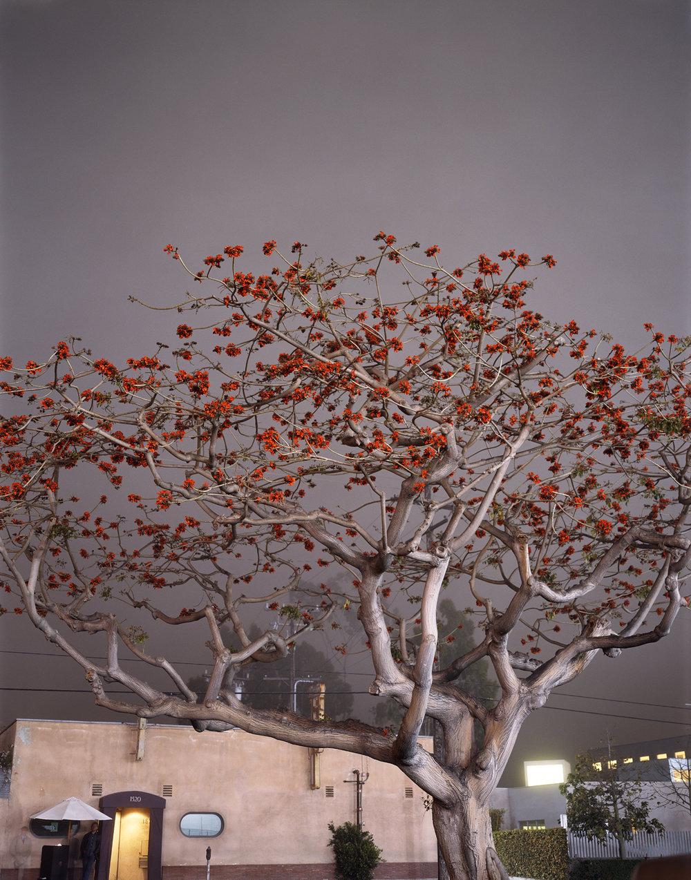 coral.tree.jpg