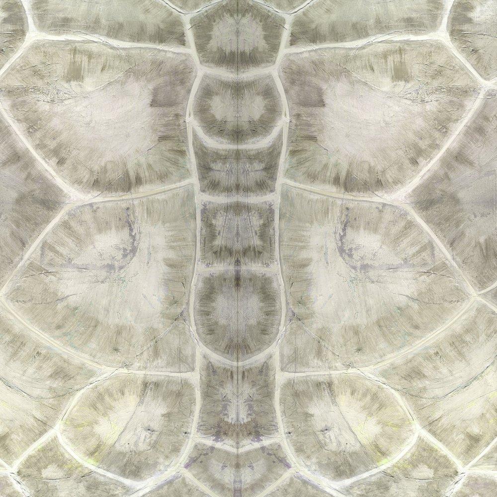 Dandridge Art | Tortoise Shell Wallpaper | Nature Pattern Wallpaper