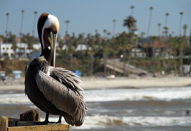 pelican-2225050_640 (1).jpg