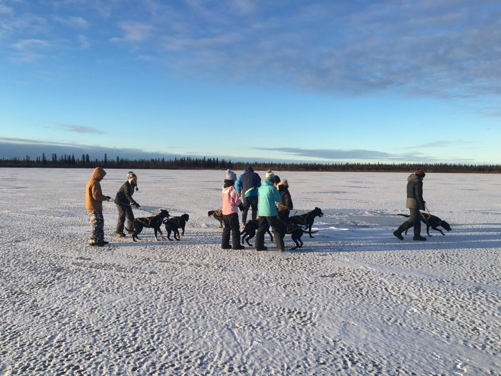 Huslia JHS students take Wilson Sam's dogs for walk on the lake.