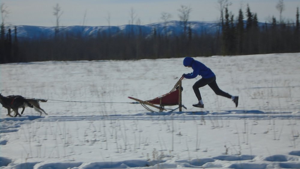 Mentasta Lake School student running dogs at Tok Track.