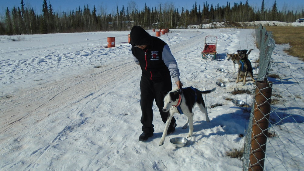 Mentasta Lake School student handling dog at Tok Track.
