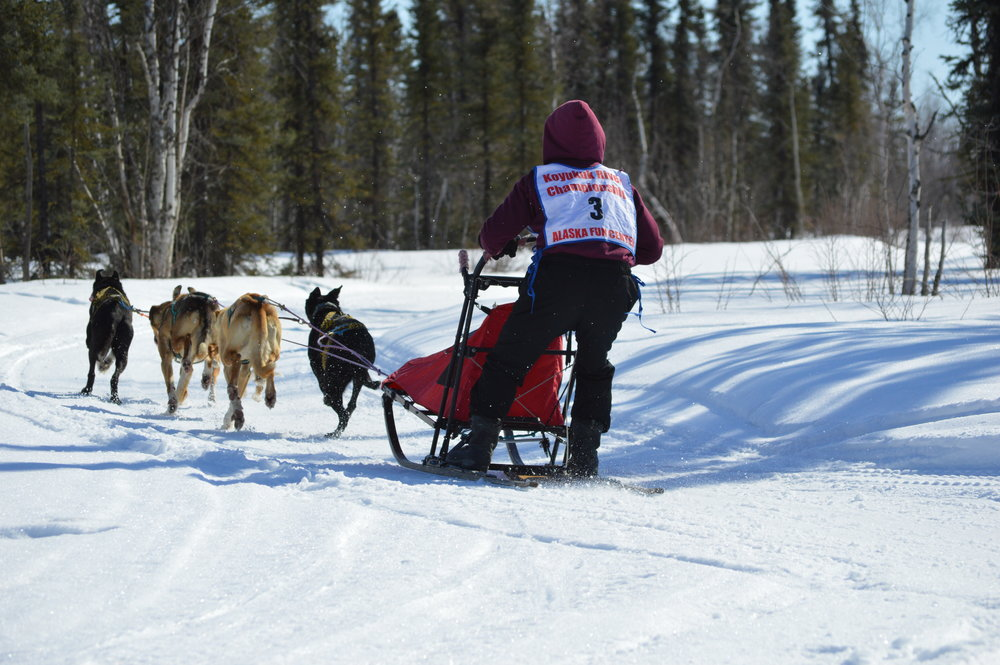 Huslia Jr. Carnival - Junior Musher racing.