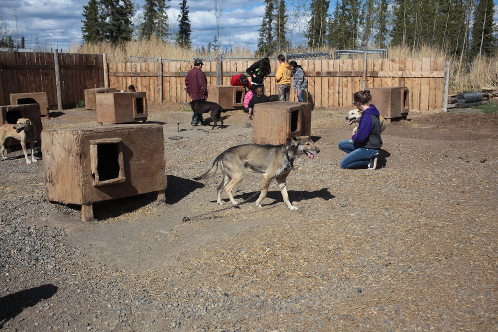 Eagle & Tanacross students in dog yard.