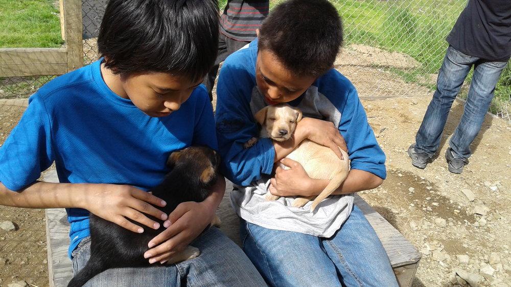 Handling puppies.