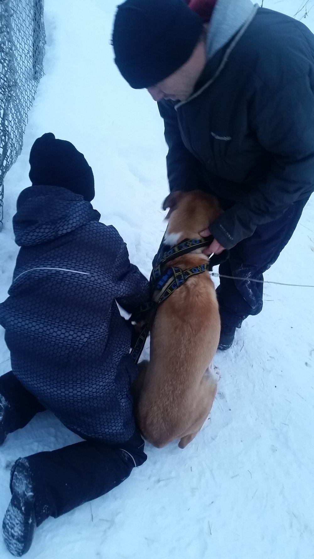 Dog musher teacher Charley Wofford helps a student harness a dog.