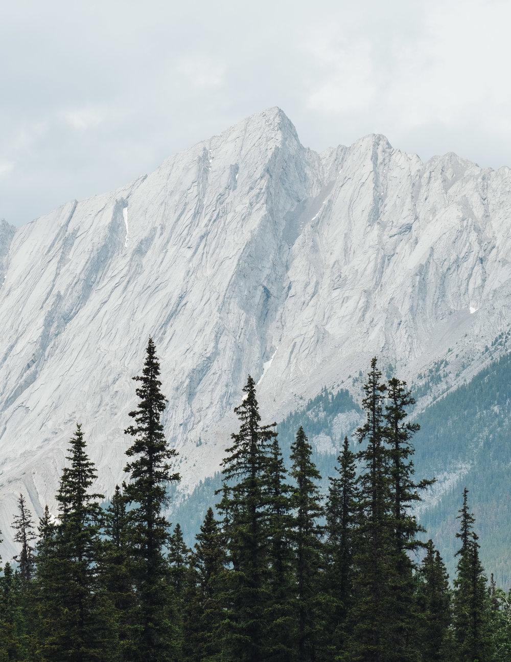 Jasper-11.jpg