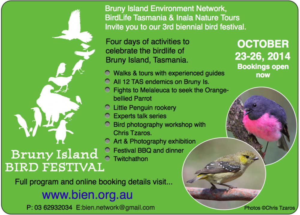 Bird Festival Flyer