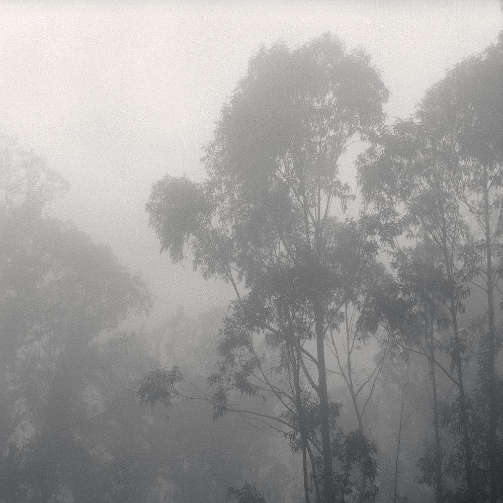 Trees, Joaquin Miller Park
