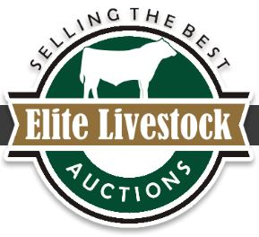 Sale interfaced with Elite Livestock Auctions   Videos of all bulls online NOW as well as live bidding.  Click to see videos and pics.