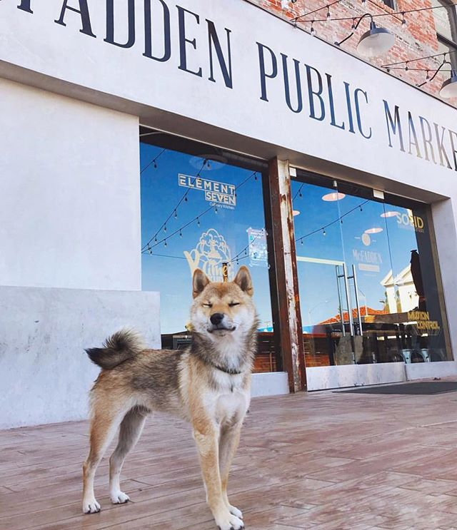 Prepping our holiday bodies 🦃 with our furry friends. 💕 We love and welcome our furry animals to hang out with us on our patios! 🐕 Bring your pups & grab some food + booze for a good time! 🍻 Located in the heart of @dtsantaana! // Don't forget - We are CLOSED ON THANKSGIVING DAY! 📷: @kenji.theshibainu #dtsa #santaana #dtsantaana #dog #kenjitheshibainu #mcfaddenpublicmarket