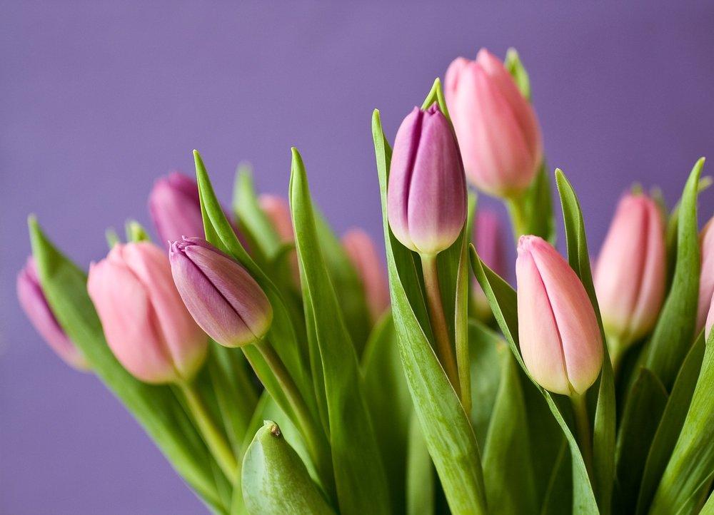 bloom-blossom-flora-54186.jpg