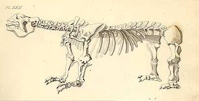 Megatherium. Text and illustration by James Parkinson.
