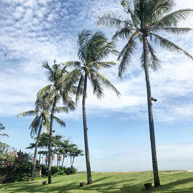 t r a v e l ❤️ me a #palmtree