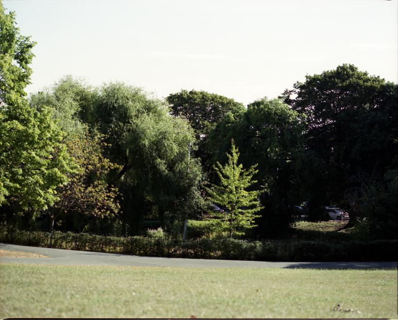 treesmaple3.jpg