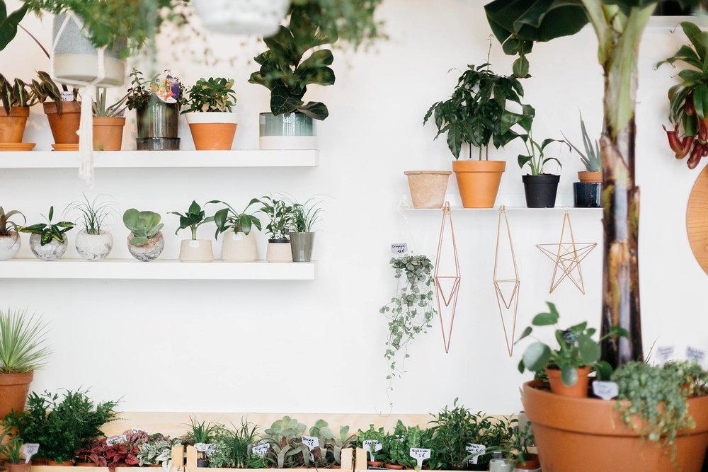 Agave - vente et location de plantes