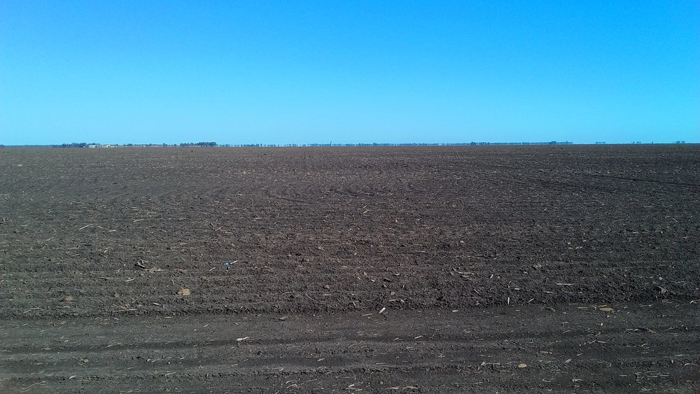 The black soil country of the Darling Downs, near Dalby