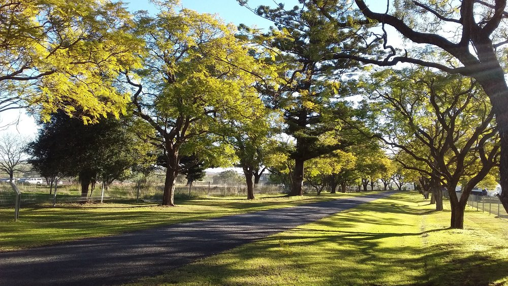 The driveway to Jimbour House