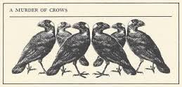 A murder of crows (thanks to James Lipton)